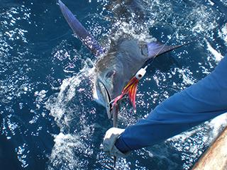 galapagos sportfishing