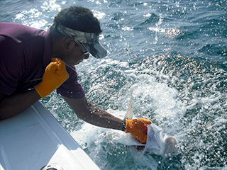panama fishing charters