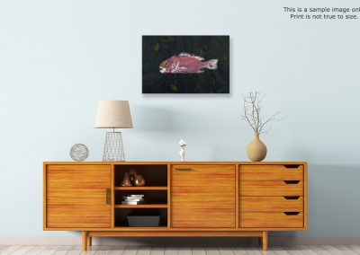 japan saltwater fish art store