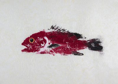 japan saltwater fish art store