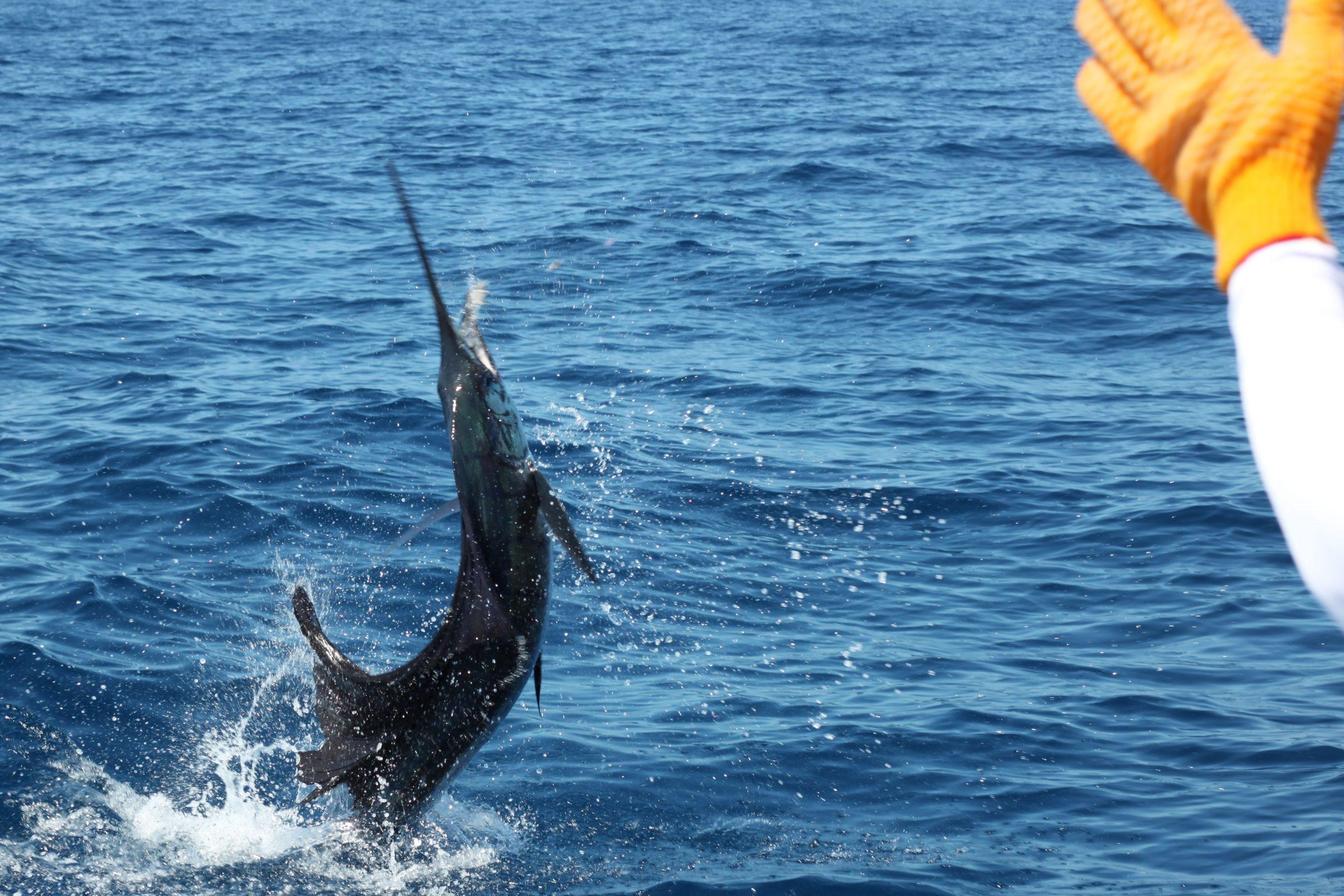 Sportfishing Panama